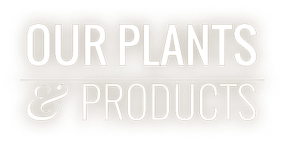 Our Plants & Products