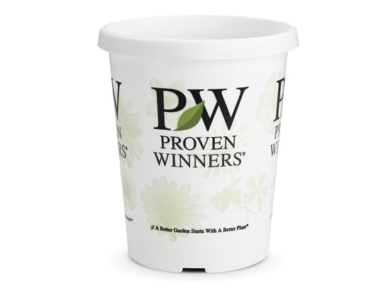 4.25 Proven Winners® Grande™ Sold 10 per Tray