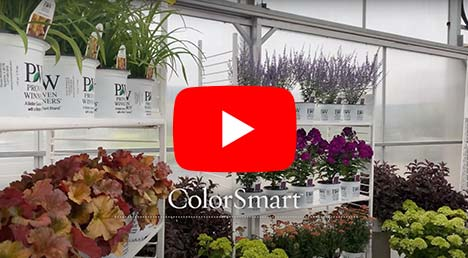ColorSmart Perennial & Shrub Program