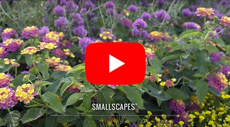 Smallscapes Gardens
