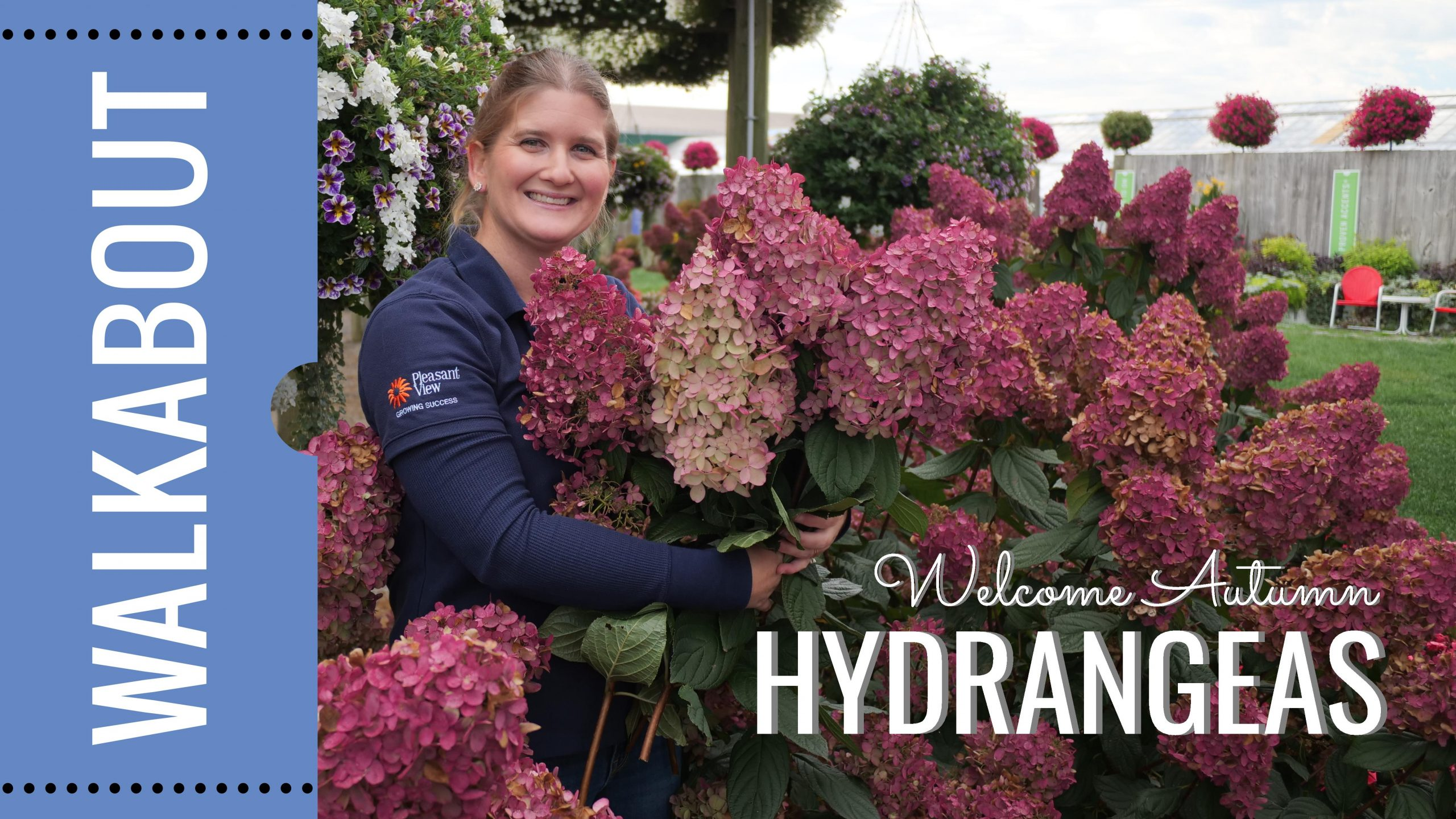 End of Season: Hydrangea Tips