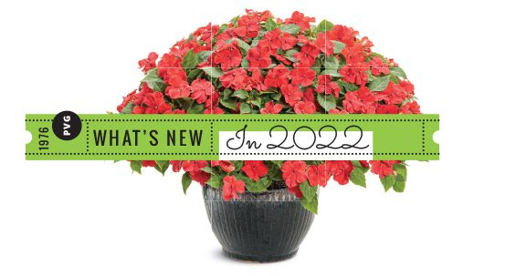What's new in 2022
