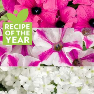 Blind Love Recipe of the Year